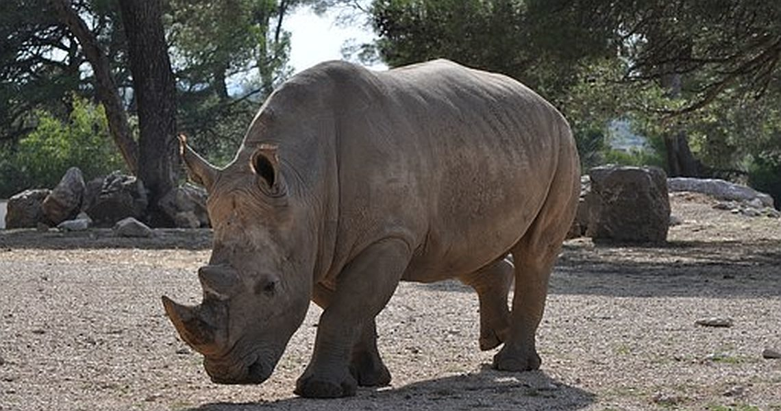 Wildlife beckons bowlers to Johannesburg